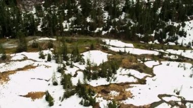 Aerial view of snowy forest — Vídeo stock
