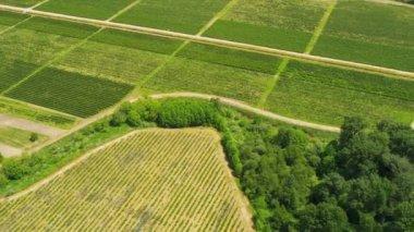 Aerial view Canadian wine producing vineyards, Vancouver, Canada — Vídeo de Stock