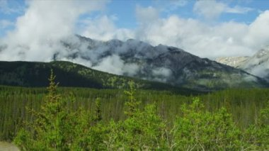 Mountain Peaks Coniferous forest, Canada, — Stock Video