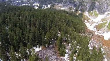 Aerial view coniferous forest snowy valley, Canada — Stock Video