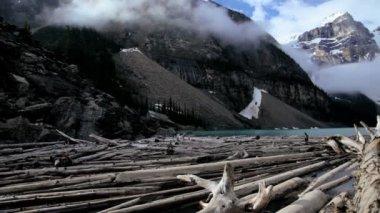 Driftwood timber logs Lake Moraine, Banff, Canada — Stock Video
