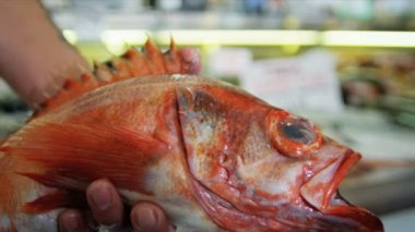 新鮮な太平洋赤い岩魚パイク プレース市場、シアトル、アメリカ合衆国 — ストックビデオ