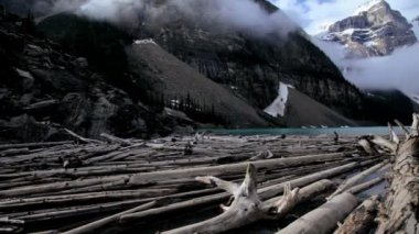Driftwood timber logs Lake Moraine, Banff, Canada — Stock Video
