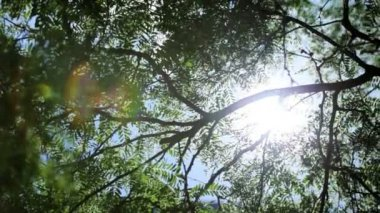Natures green trees radiating sunlight downward — Video Stock
