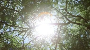 Natures green trees radiating sunlight downward — Stock Video