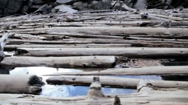 Driftwood timber on Lake Moraine — Stock Video
