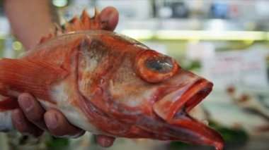 Fresh Pacific Red Rock fish Pike Place, Seattle, USA — Stock Video