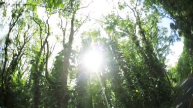 Sunlight flowing onto tropical rainforest — Stock Video