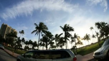 Driving past swaying Palm trees — Stock Video