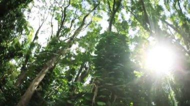 Sunlight flowing onto tropical rainforest — Stock Video