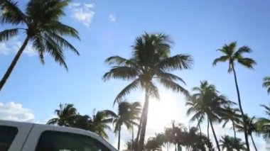 Driving in the tropical sunlight — Stock Video