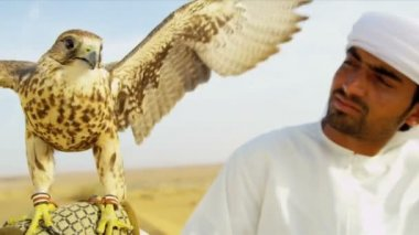 Saker falcon tethered to owners wrist — Stock Video
