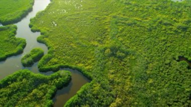 Aerial view Everglades  Wetlands, Florida — Stock Video