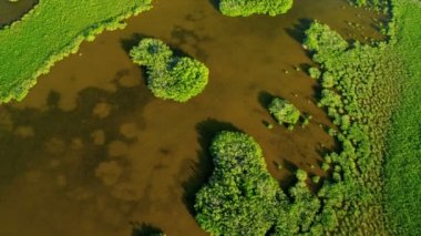 Aerial view of the nature of Florida — Stok video