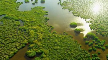 Aerial view Everglades  Wetlands, Florida — Vidéo