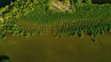Brown waters within the mangrove thickets — Stock Video