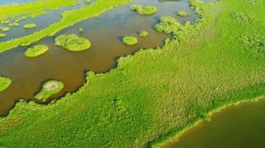 Aerial view of the nature of Florida — Vidéo