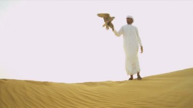 Man with falcon tethered to his wrist — Stock Video
