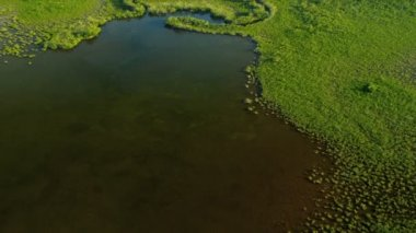 Brown waters within the mangrove thickets — Vídeo de stock