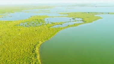 Aerial view Everglades  largest Sub tropical region in USA — Stock Video