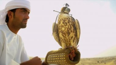 Arabic man with trained falcon — Stock Video