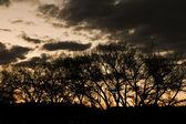 在晚上与它背后夕阳树 — 图库照片