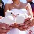 White wedding doves — Stock Photo #29983839