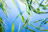 Erba verde sotto il cielo — Foto Stock