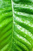 Yaprak yeşil doku — Stok fotoğraf