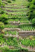 Wineyards — Stock Photo