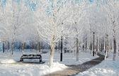 Winter in het park — Stockfoto