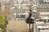 Piccione davanti a tetti di parigi — Foto Stock