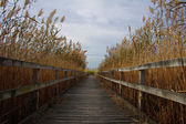 Walkway through reeds — Stock Photo