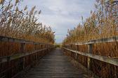 Walkway through reeds — Stock Photo