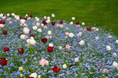 Multi coloured flower bed — Stock Photo