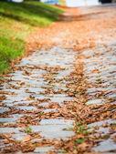 地面に茶色の紅葉 — ストック写真