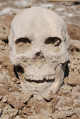 Skull on the ground — Stock Photo