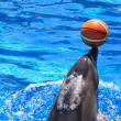 Sweet Dolphin with ball — Stock Photo
