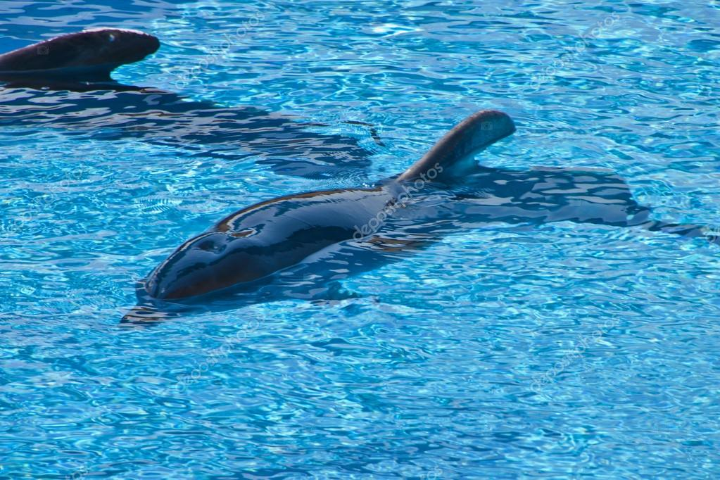 Dolphin Pool In The Sea Park Stock Photo Deep76 28904701