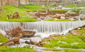 Beautiful Waterfall Scene in Turkey — Stock Photo