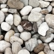 River Stones — Stock Photo #14734301