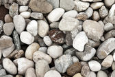 River Stones — Stock Photo