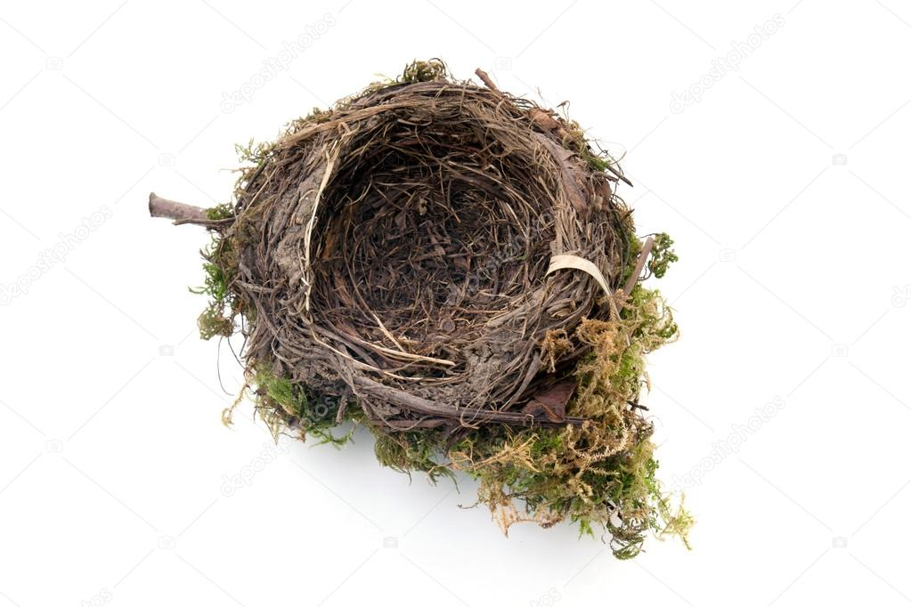 Empty bird nest isolated on white background — Stock Photo #14732455