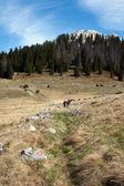 Marques de randonnée sur les montagnards de pierre et de groupe — Photo