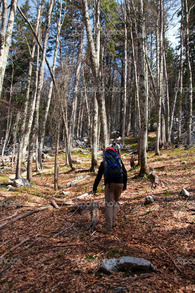 Mountaineers hiking through the forest — Stock Photo #14794089
