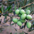 Green olives — Stock Photo #14834073