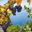Grape and sea — Stock Photo