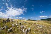 Embargo con una hierba seca y piedras — Foto de Stock