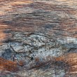 Natural wood textures — Stock Photo