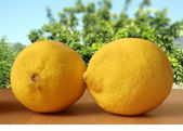 Two fresh lemons — Stock Photo